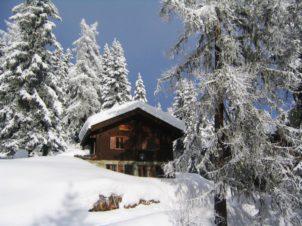 arbre Montagne neige hiver gel chaîne de montagnes Météo sapin saison épicéa Suisse chalet piste charme gel Bettmeralp Plante ligneuse Phénomène géologique Neige de vacances Saison de ski